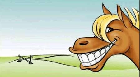 Photo ads/567000/567652/a567652.jpg : Zahnpflege für pferde